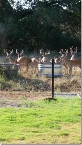 56 Old Ranch Road 12, San Marcos, TX 78666