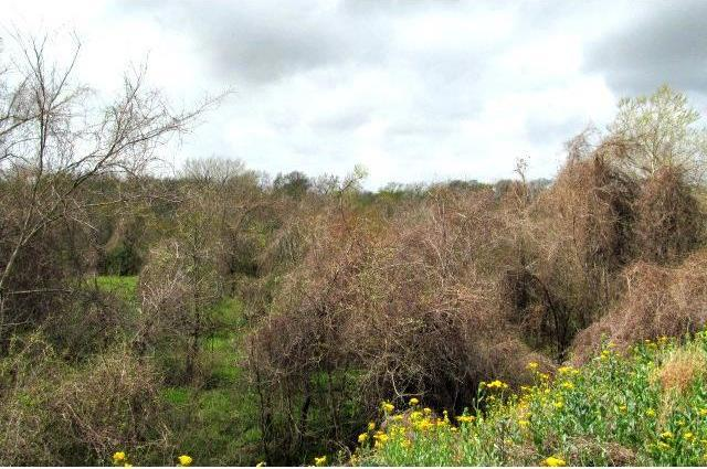 9.63 Ac On Lyle Rd Easement, Other, TX 78934