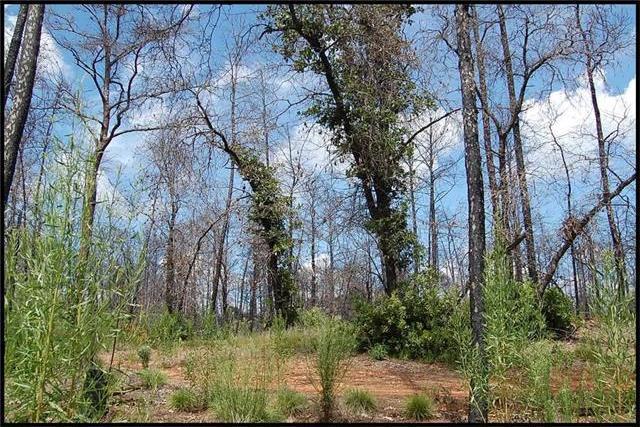 1433 A Park Road 1c, Smithville, TX 78957