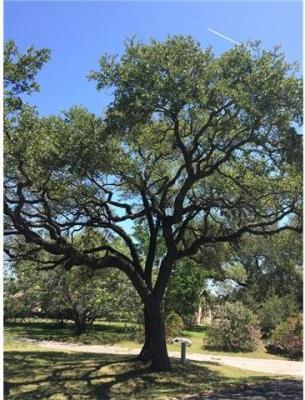 Photo of Spanish Oak Dr, Round Rock, TX 78681