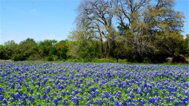1525 Rocky Creek Rd, La Grange, TX 78945