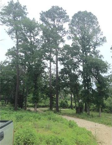 131 Forest Ln, Bastrop, TX 78602