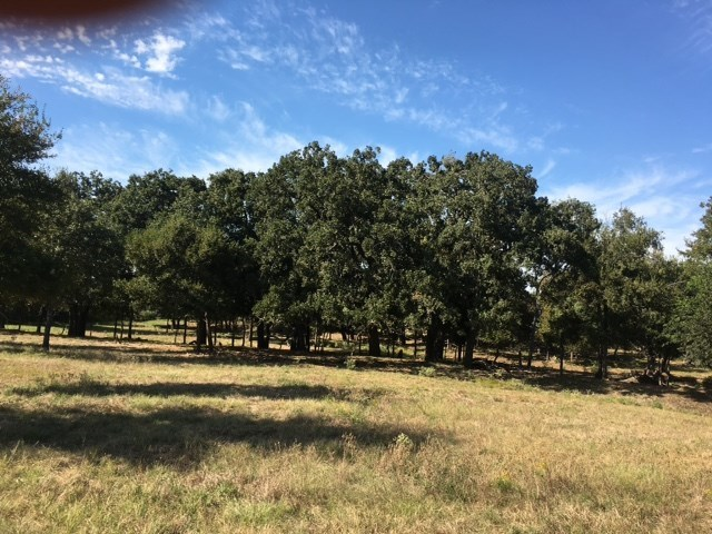 Tract 7 Cr 468, Coupland, TX 78615