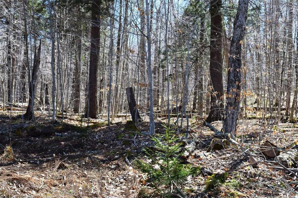 South Shore Road, Old Forge, NY 13420