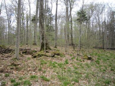 5.1 Fulton House Spur #2, Old Forge, NY 13420