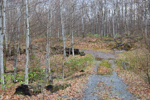 State Route 28, Woodgate, NY 13338