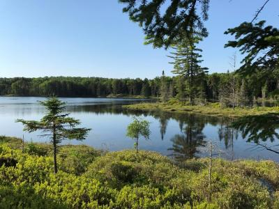 Photo of Tamarack Drive, Old Forge, NY 13420