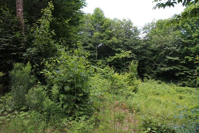 187 Pawnee, Old Forge, NY 13420