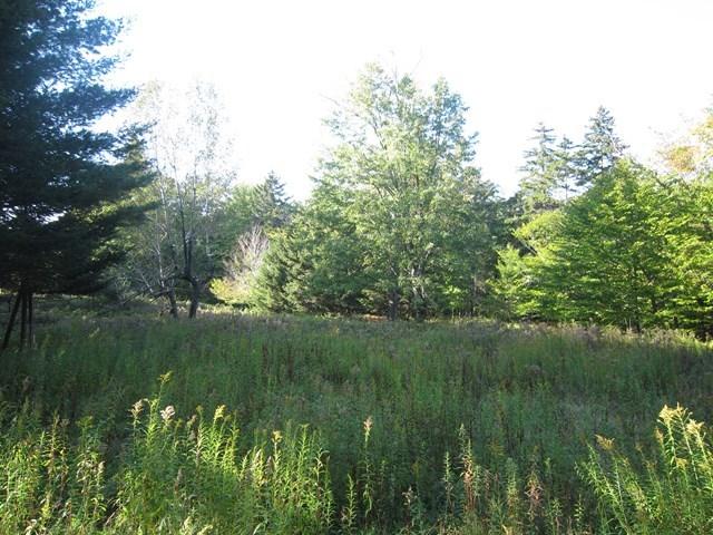 Trees, Wildlife Abound! - Big Moose Road (Big Moose) Eagle Bay NY 13331