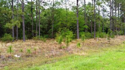 Photo of Dragoon Court, Summerdale, AL 36580