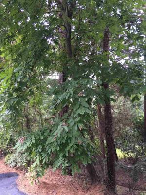Photo of Pinewood Av, Elberta, AL 36530