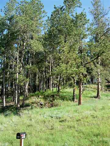 324 Forest, Hill City, SD 57745
