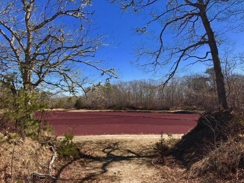 Airline Road #Lot #1, Dennis, MA 02660