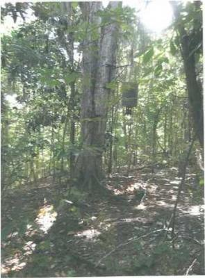 Photo of 679.10 Acres Ocmulgee, Kathleen, GA 31047