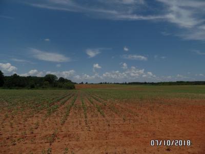Photo of Jenkins Farm, Byromville, GA 31007