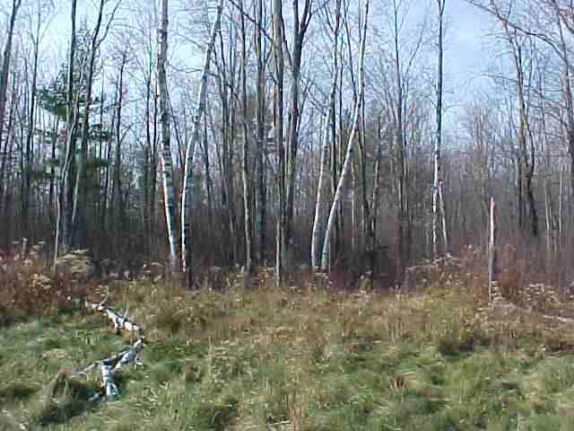 Lot 12 Wood Duck Lane, Merrill, WI 54452