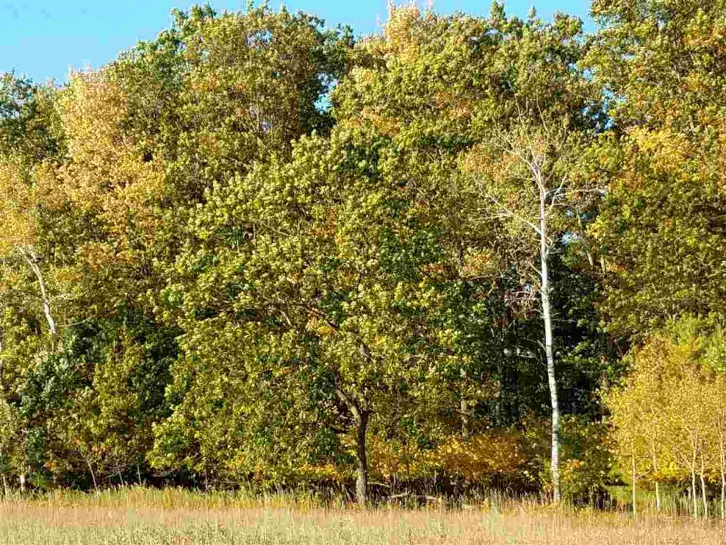 5770 Rileys Way Lot 5, Rosholt, WI 54473