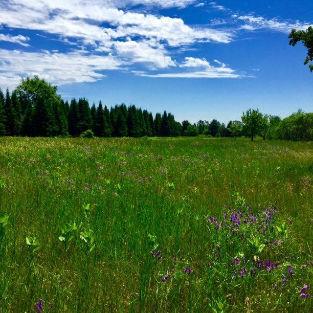 Lot 17 Torrey Pines Way 925 Torrey Pines Way, Plover, WI 54467