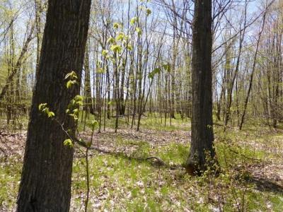 Photo of Lot 2 Mount View Road, Mosinee, WI 54455