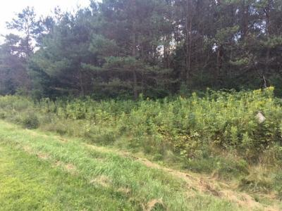 Photo of Lot #6 Pine River Road, Merrill, WI 54452