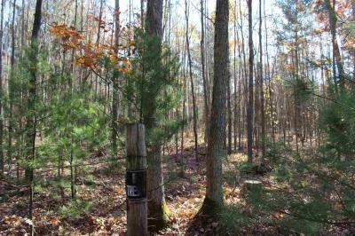 Photo of Sand Road, Neillsville, WI 54456