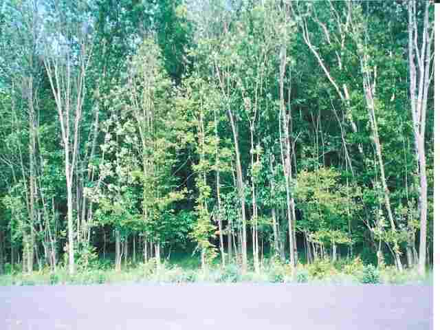 Lot 19 Woodridge Drive, Marshfield, WI 54449