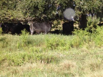 Photo of County Rd 835, Clewiston, FL 33440