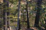 EM2 Woody Tucker Rd, Dawsonville, GA 30534