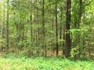 Pine Mountain Rd, Cedartown, GA 30125