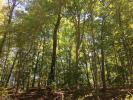Creekmont Xing, Mineral Bluff, GA 30559