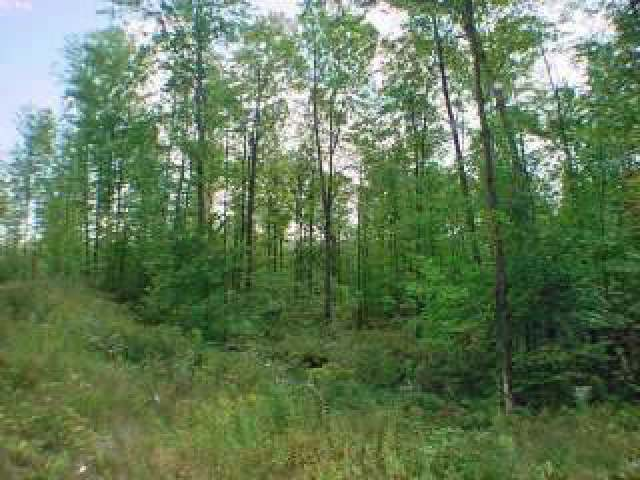 Lot 10 Sandy Cove Dr, Park Falls, WI 54552