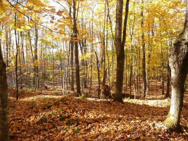 NEAR Twin Lake Rd, Conover, WI 54519