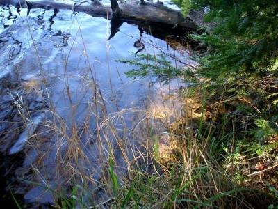 Photo of 3320 Duck Lake Rd W, Watersmeet, MI 49969