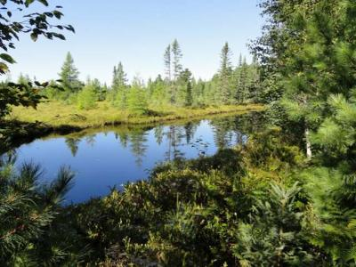Photo of ON Camp 9 Rd #1, 4,+80ac, Minocqua, WI 54548