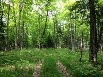 Photo of Lot21&23 Cth N, Sayner, WI 54560