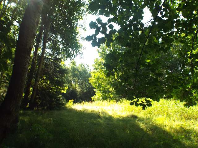 5 ACRES Cth G, Pelican Lake, WI 54463