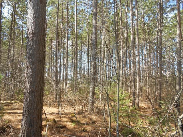 ON Towering Pines Ln #Lot 7, Rhinelander, WI 54501