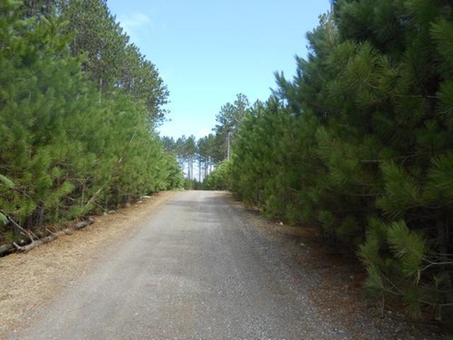 ON Towering Pines Ln #Lot 6, Rhinelander, WI 54501
