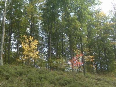 Photo of Lot 61 Pine Grove Dr, Rhinelander, WI 54501