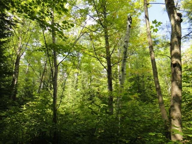 Lot 2 ON Sanctuary Rd, Tomahawk Township, WI 54487
