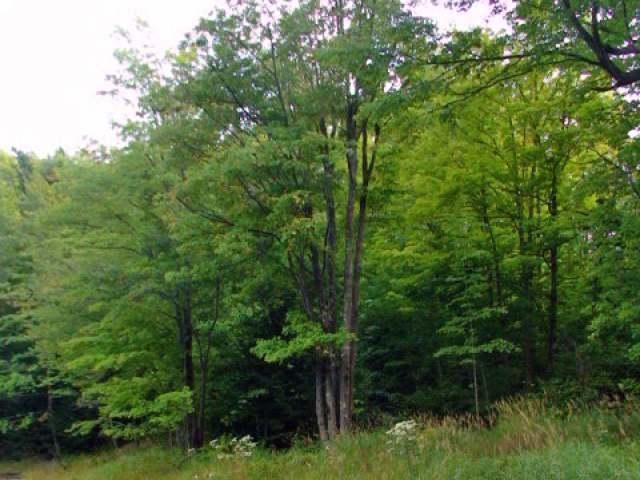 Lot 20 Overlook Dr, Gleason, WI 54435