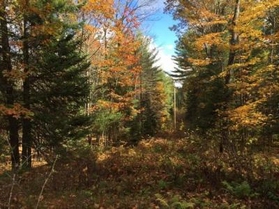Photo of ON Pioneer Rd, Conover, WI 54519