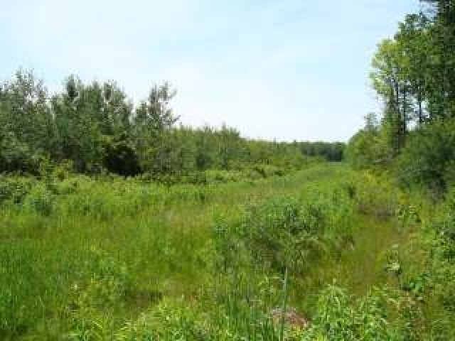 NEAR Peterson Rd #80 Acres, Ackley, WI 54409
