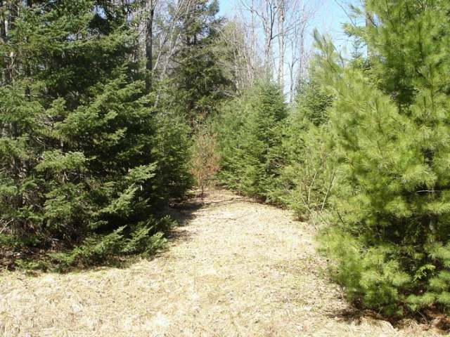 Lot 1 Palmer Lake Rd, Land O Lakes, WI 54540