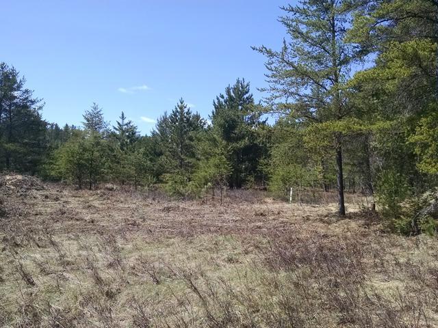 6137 Red Pine Ln, Land O Lakes, WI 54540