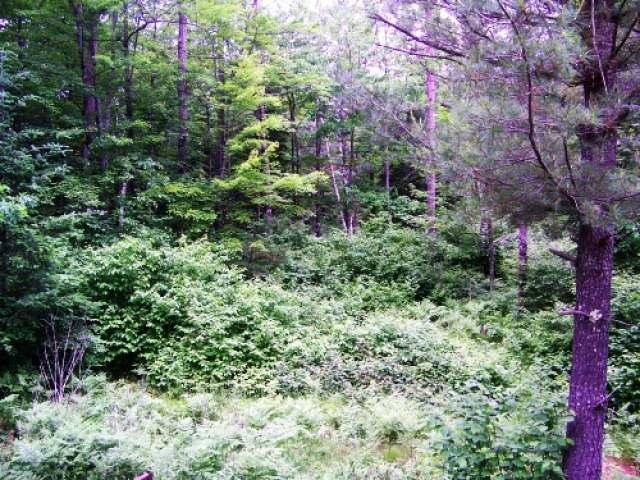 Lot 6 Woodchuck Ln, Minocqua, WI 54548