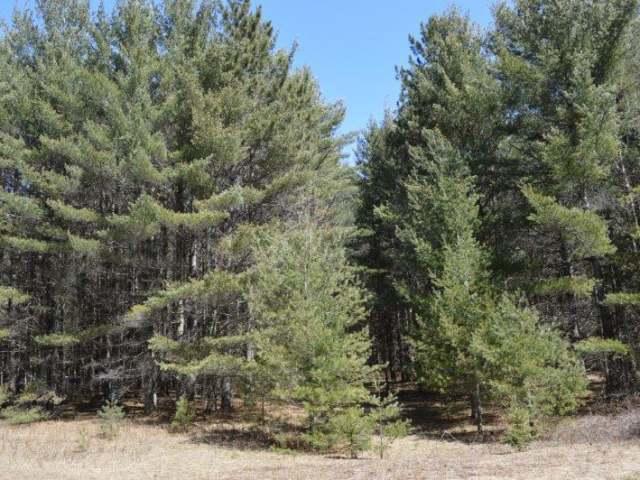 ON Elk Mound Dr #Lot 10, Arbor Vitae, WI 54568
