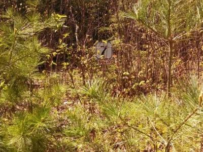 Photo of ON Pine Crest Ln #Lot 7, Plum Lake, WI 54560