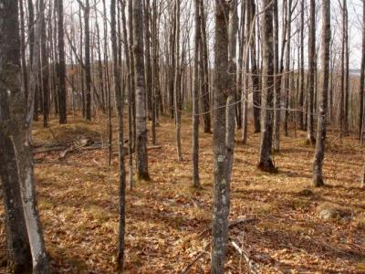 Photo of Lot 16 South Maple Rd, Phelps, WI 54521