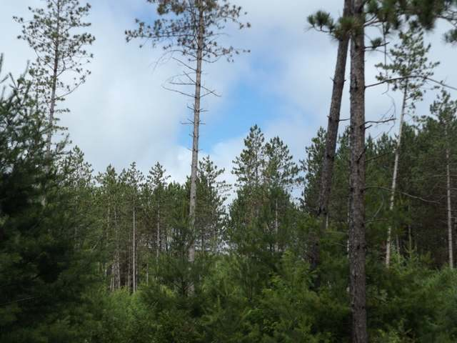 1.54 ac. Clear Lake Rd, Elcho, WI 54428
